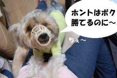 dog5_20130402032226.jpg