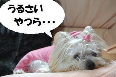 dog7_20130408082539.jpg