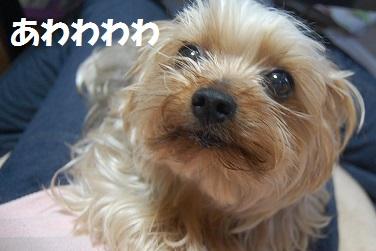 dog8_20130408082540.jpg