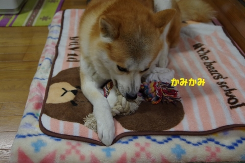 004うめちゃん20131214