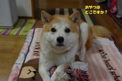 006うめちゃん20131214