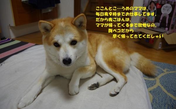 048うめちゃん201312