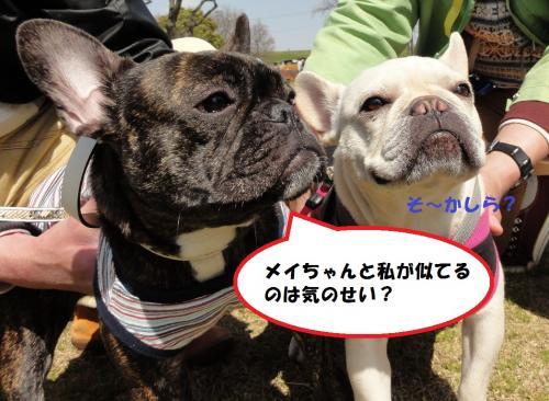 2012_0401_125231-DSC02579_convert_20120404000444.jpg