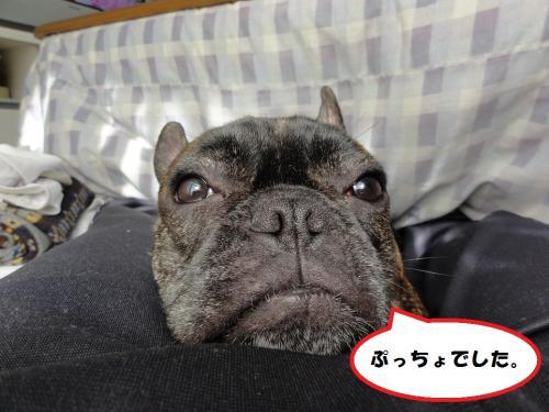 2_convert_20120303125055.jpg