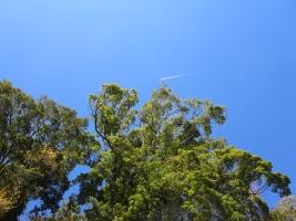 近戸神社の上空、飛行機雲
