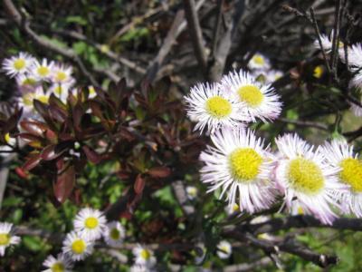 春咲く花、強い花だよ