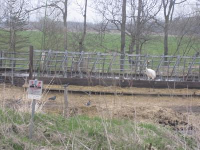 牛小屋の外に鶴