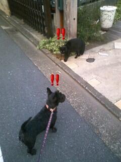 スールさんと黒猫
