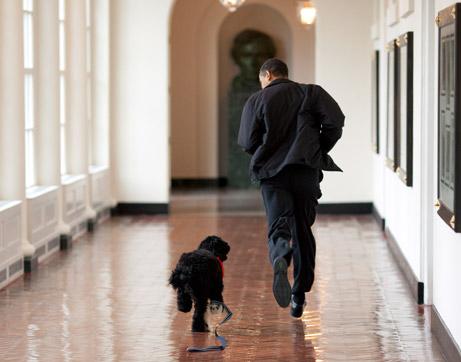 090414-obama-dog-picture_big.jpg