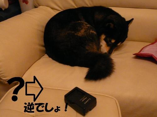 P1360789_convert_20131215043513593.jpg