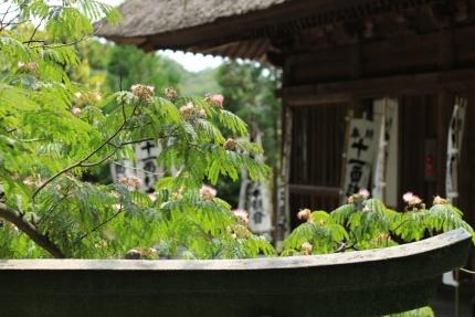 杉本寺 011
