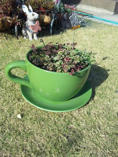 コーヒーカップ鉢
