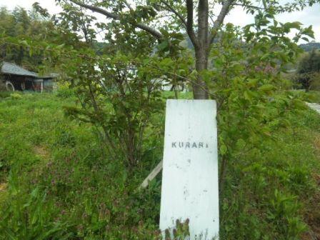 KURARI