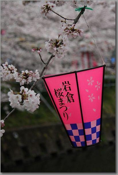 岩倉桜 005
