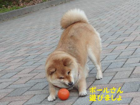 ボールさん