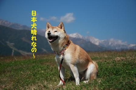 日本犬晴れ
