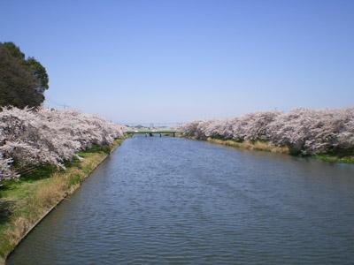 桜のみえる河川敷