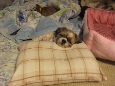 床暖はいつつけてくれるんかな。。。