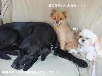 アタシ犬キライやのに・・・