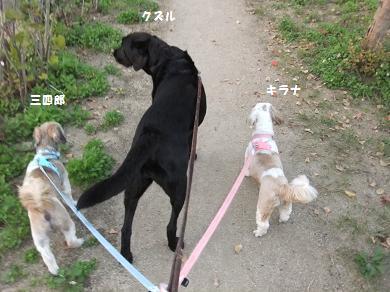 今日の散歩は用水路コースねっ♪