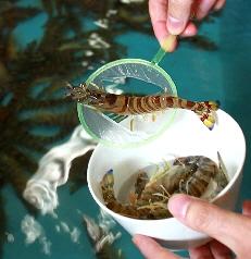 堺魚市場5