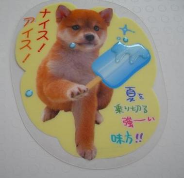 柴犬カード1.jpg