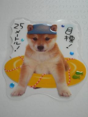 柴犬カード2.jpg