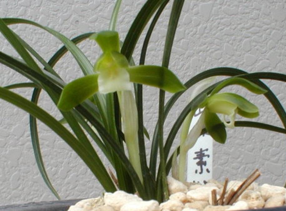 hiraiyama_20131214111245a26.jpg