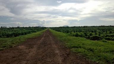 ラオス コーヒー農園