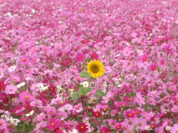 006+(10)_convert_20111030183815.jpg