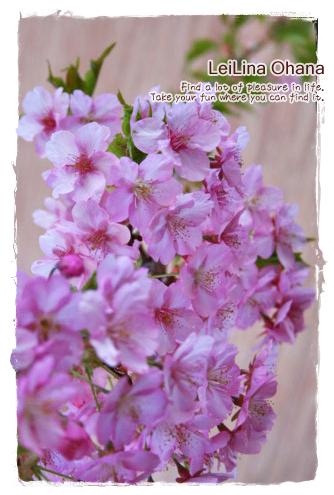 2012_0404_4.jpg
