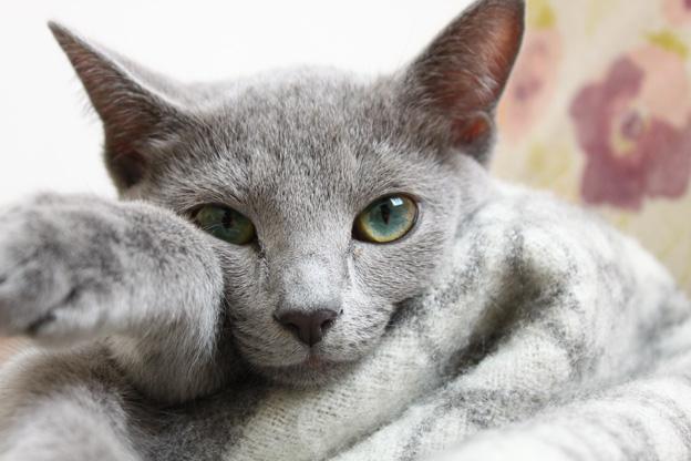 居眠り猫2