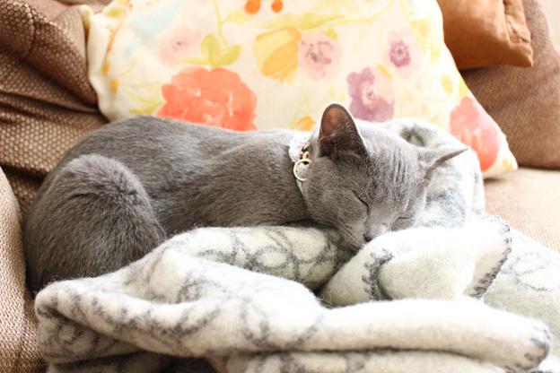 居眠り猫1