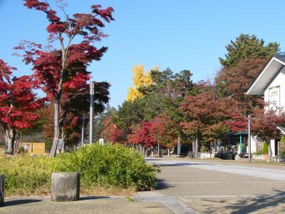 秋晴れの公園