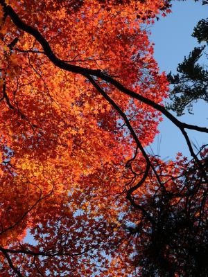 秋晴れの公園2