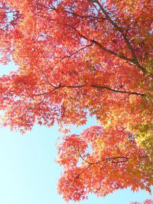 秋晴れの公園4