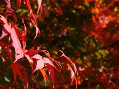 秋晴れの公園5
