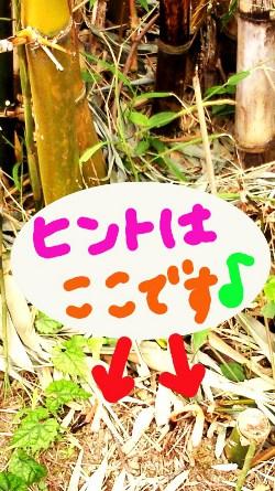 お庭に・・☆