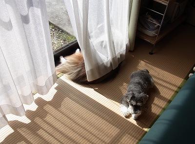 日向ぼっこ姉妹