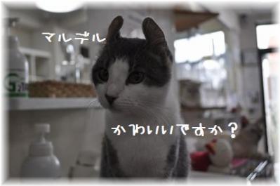 20110918_01.jpg