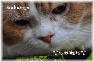 20110918_04.jpg