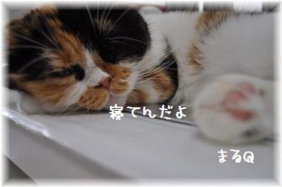 20110918_05.jpg