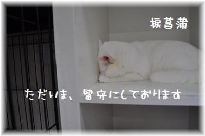 20110918_07.jpg