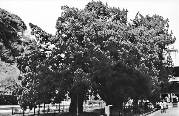 re-大きな木