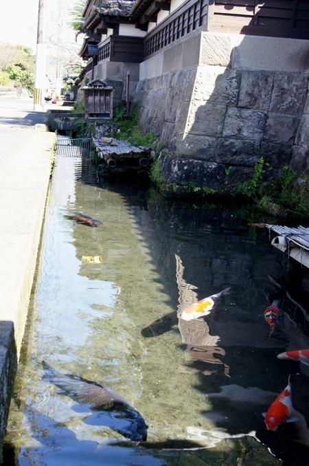 230923 鯉が泳ぐ通り2