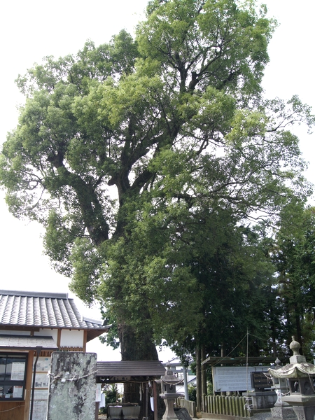 231001 豊福阿蘇神社7