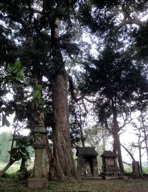 231016 耳取神社の森3