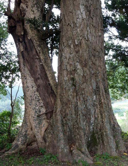 231016 耳取神社の森4