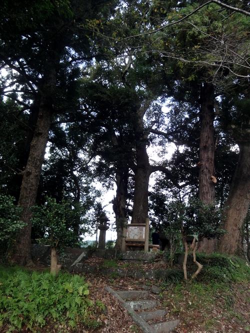 231016 耳取神社の森2-1
