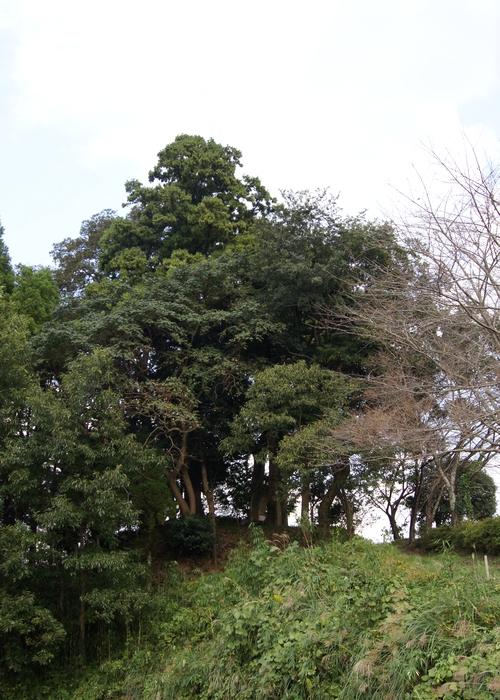 231016 耳取神社の森1